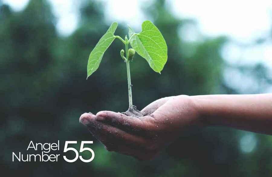 55 Angel Number