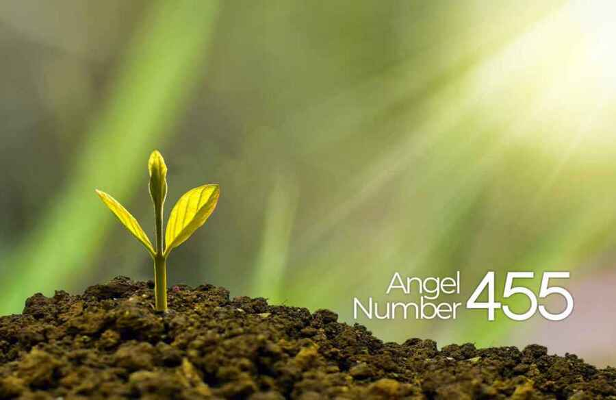455 Angel Number